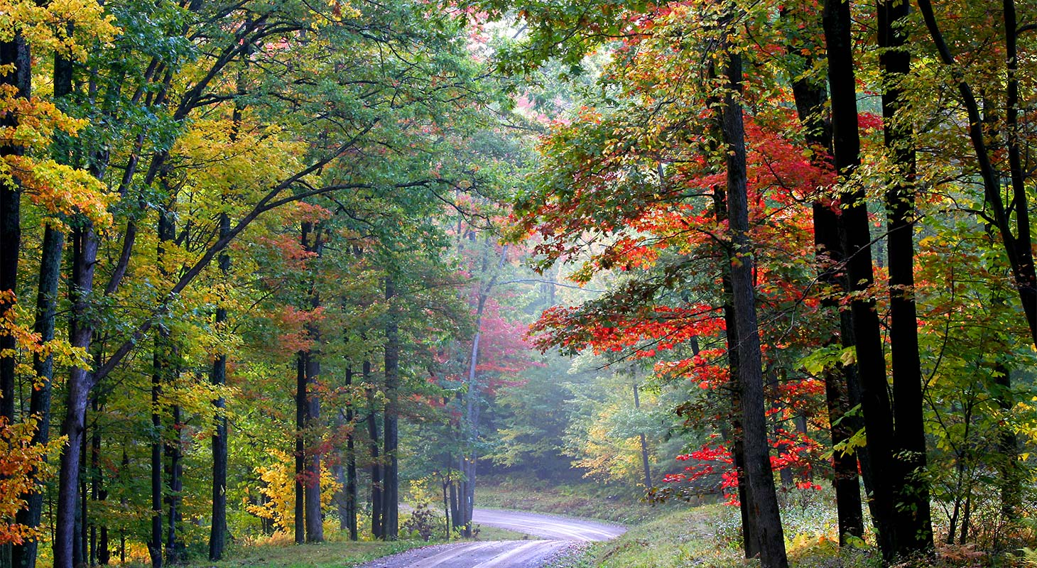 Scenic trail in the fall