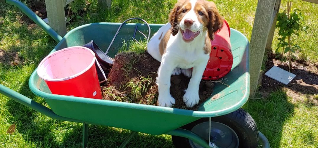 Dog in Wheelbarrow