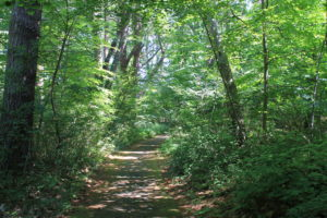 Tree lined path in Kennebunk