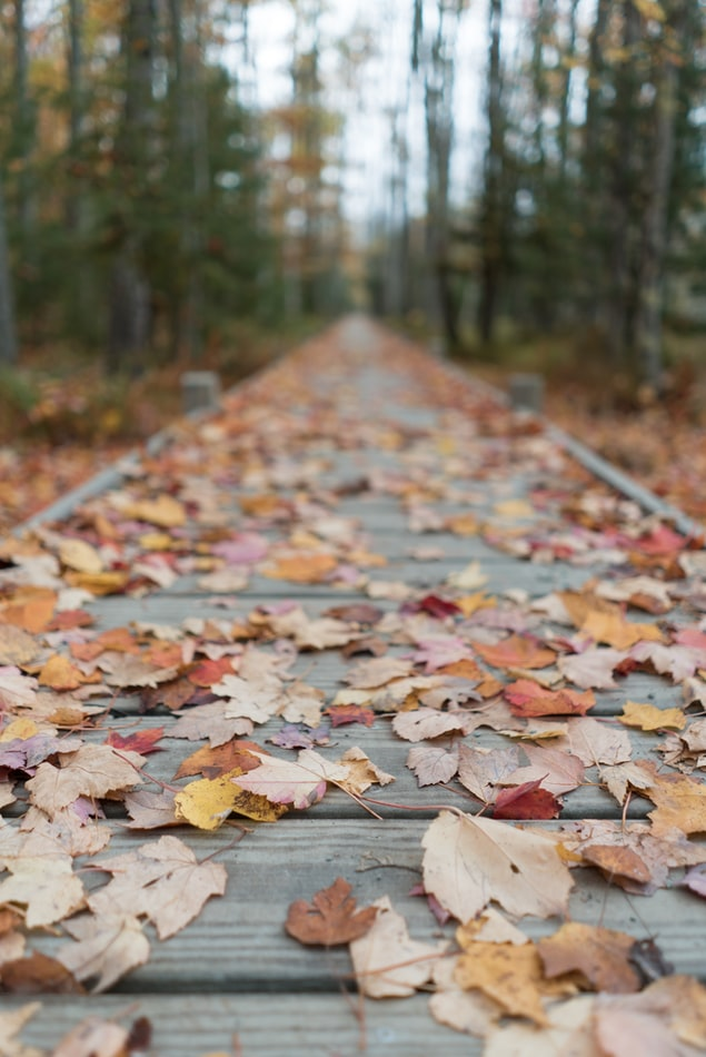 Path covered in leaves
